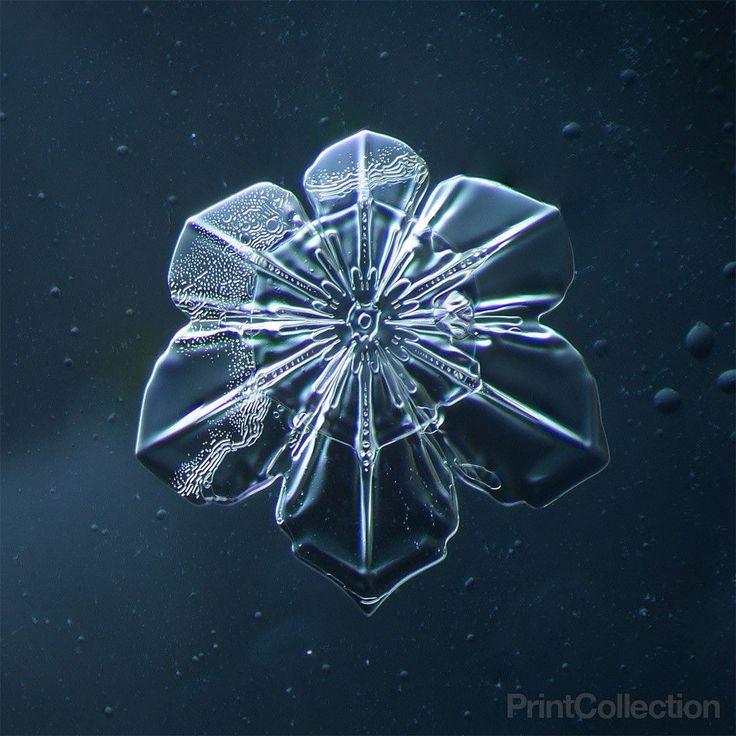 Snowflake 009.2.9.2014