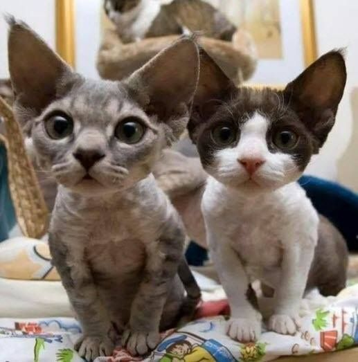 Cats or bats?   Totally cute!