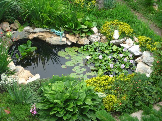 Mejores 417 im genes de piletas en mi jardin en pinterest for Piletas para peces