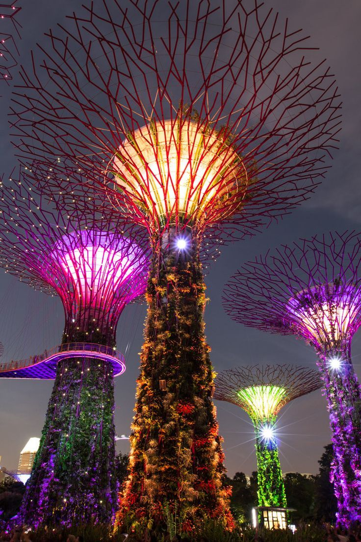 8 fun things to do in singapore with kids where to eat sleep gardens by the baysingapore - Garden By The Bay At Night