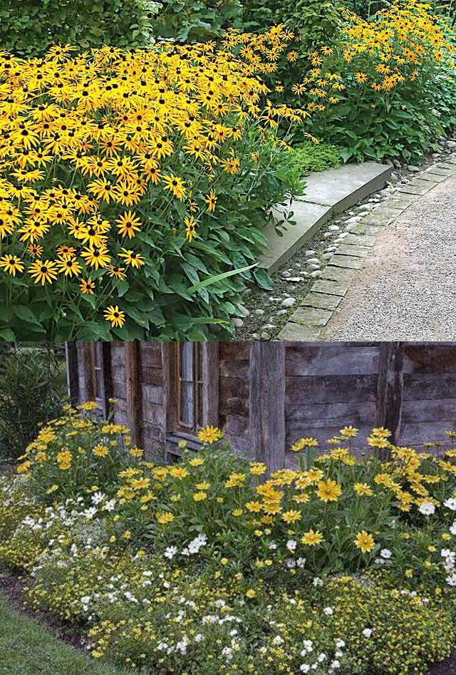 les 25 meilleures id es concernant vivaces en plein soleil sur pinterest jardin en plein. Black Bedroom Furniture Sets. Home Design Ideas