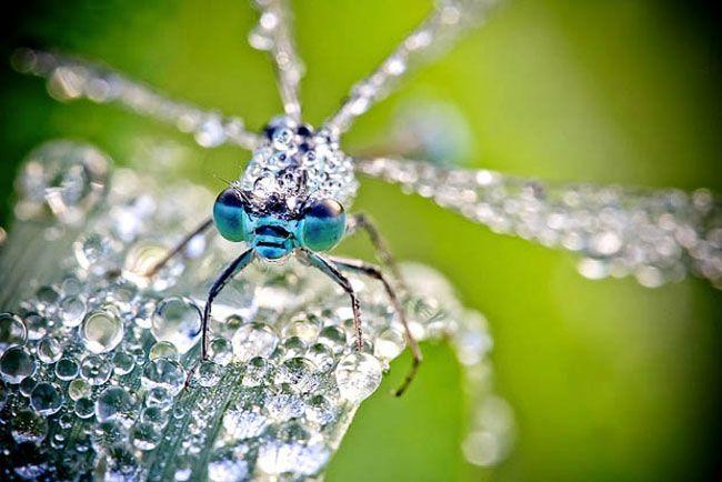 05-Macro-Photo-David-Chambon-Insects
