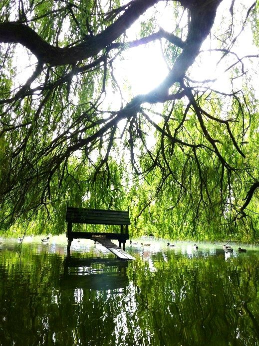 Hartley Wintney's duck house looking like a very peaceful residence for the ducks. for Mackenzie Smith Estate Agent Hartley Wintney Photo competition.