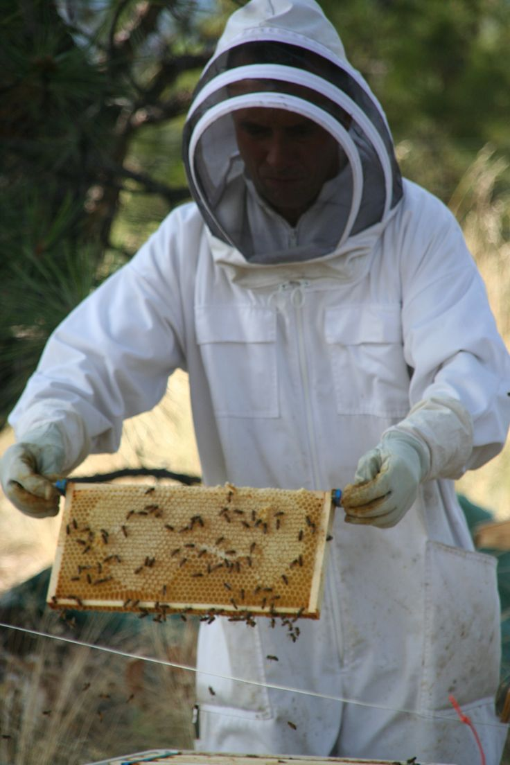 best 25 bee farm ideas on pinterest bee keeping bee hives and