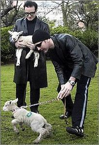 Irish rock band U2's lead singer Bono (L) and guitarist Edge hold sheep after receiving the Freedom of the City last night at Dublin's St.Stephen's Green on March 1, 2000. Following an old Irish tradition, those who are given Dublin's freedom of the city, have the right to pasture their sheep at the central Dublin St.Stephen's Green.