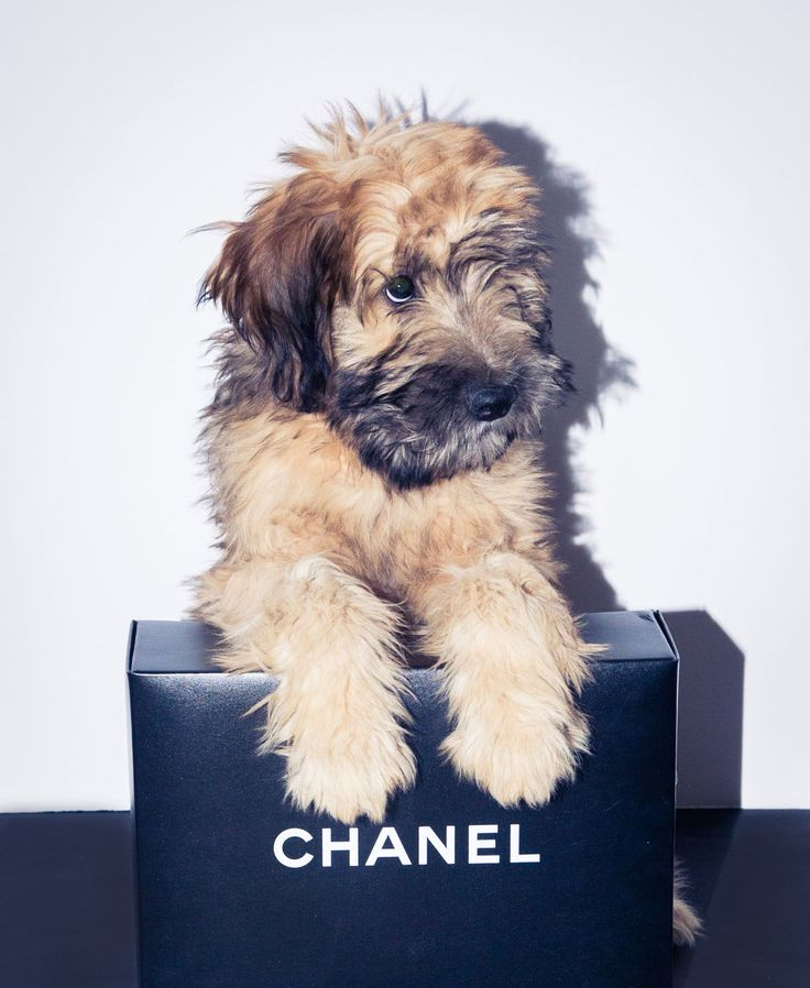 We see you staring mouth-agape at those puppy eyes and Chanel