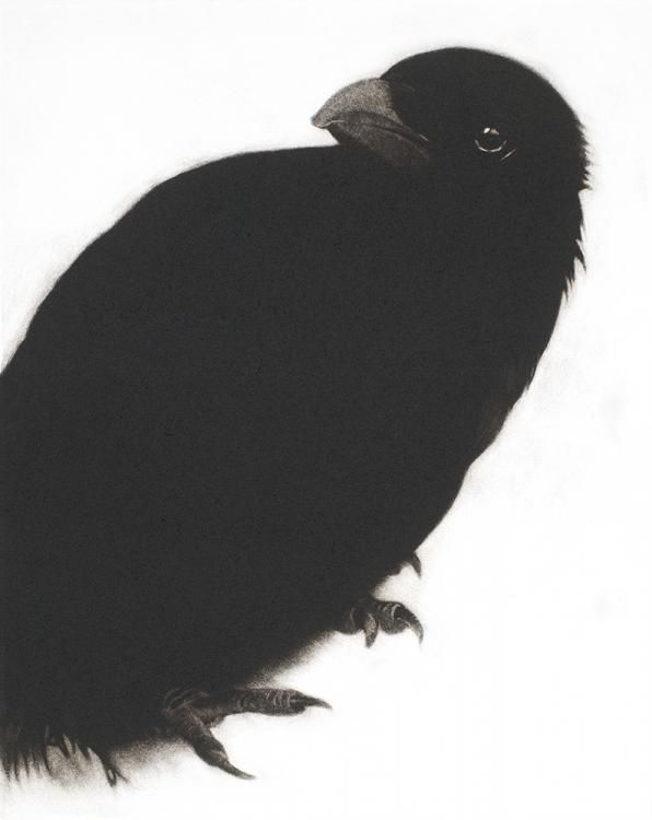 Sarah Gillespie.  My Heart a Wounded Crow  Mezzotint on hand-made Aquari paper. 29cm X 22cm.