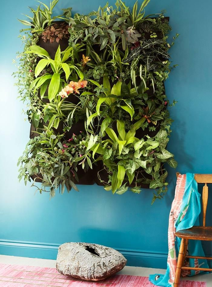 A bold turquoise wall makes this vertical garden even more impactful. So lush! So vibrant!