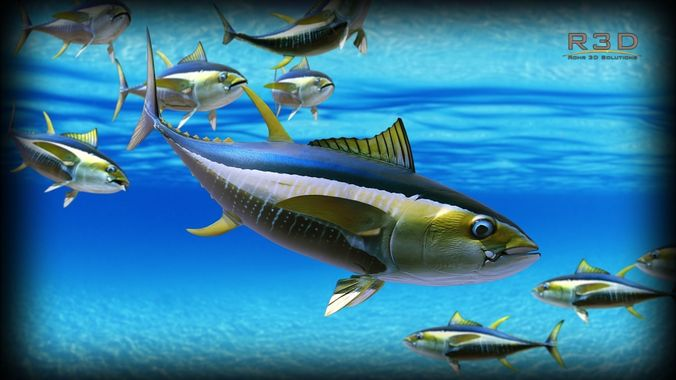 Image result for tuna fish pictures
