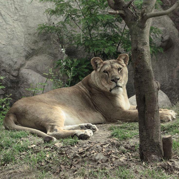 #Parque #Zoológico Buin Zoo #Animal