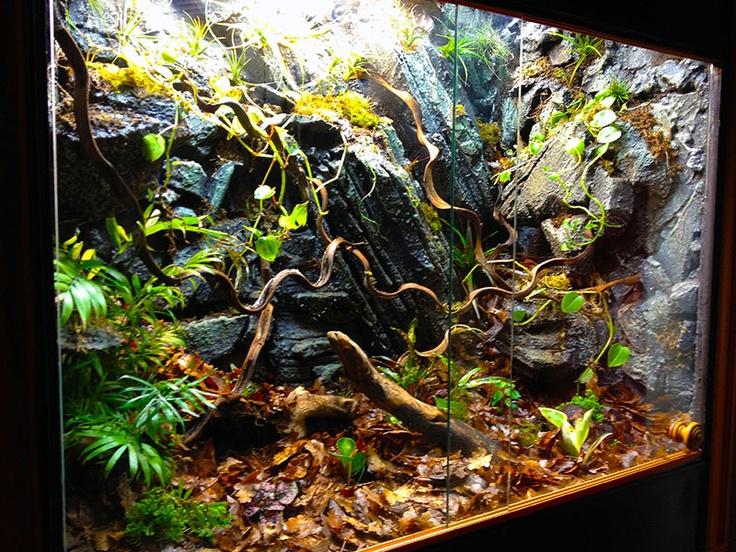 Cave wall viv. Lizard TerrariumTerrarium ... - 284 Best Aquascaping And Fish Alike Images On Pinterest Vivarium
