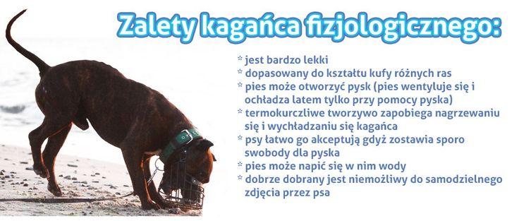 Kagańce fizjologiczne na psy różnych ras dostępne w naszym sklepie: ✏ http://sklep.codlapsa.pl/kagance Doradzimy w wyborze odpowiedniego modelu!
