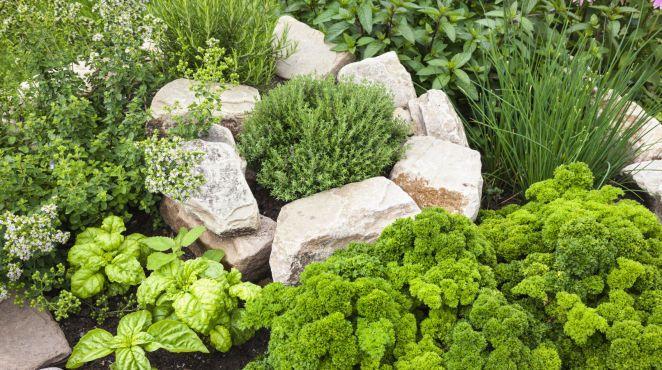 grüner daumen: Die Würze für Ihren Garten: Kräuterbeet anlegen
