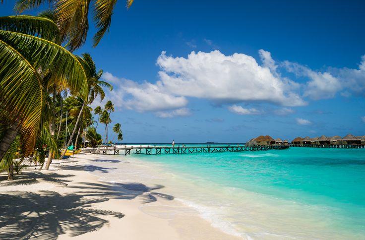 Fotografía Playa  Lagoon Palmera Sea Día Festivo Centro Turístico Tropics Muelle Maldives Constance Halaveli Resort Fondo de Pantalla
