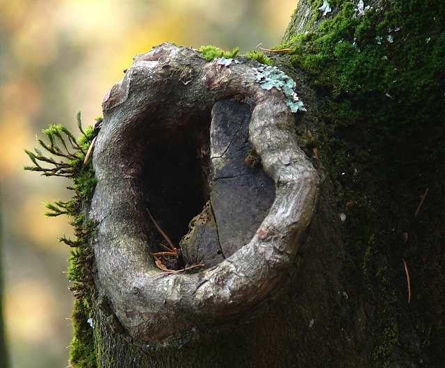 nature letters   Natural Letters - Steve's Digicams Forums