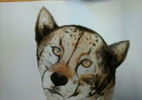 Cheetah, gepard - painting