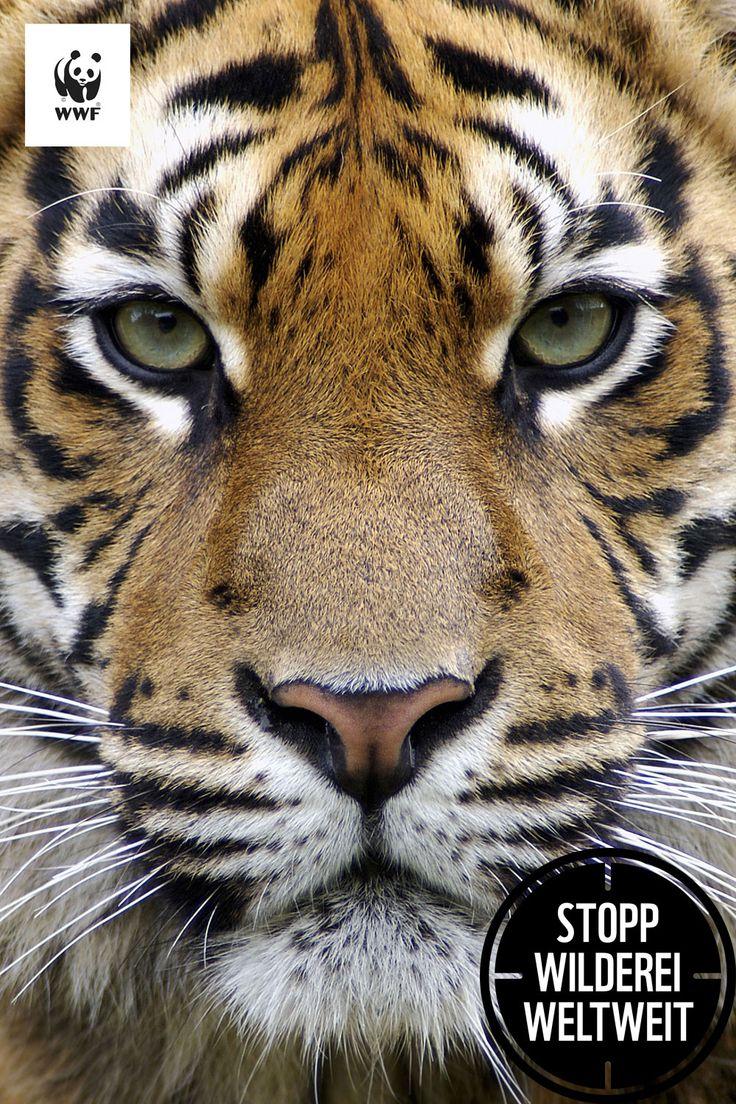 Du siehst einen Tiger. Andere ein Potenzmittel.