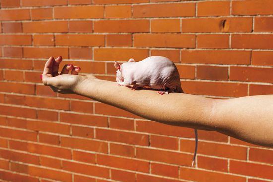"""DAVID HORNILLOS 1974  MEDIODÍA  Fotografías tomadas en la estación madrileña de Atocha, implica a la característica pared del edificio cómo hilo conductor de todas sus imágenes que expresan la rutina alrededor del edificio. Usa un flash de corta distancia para """"aplanar"""" la imagen, que las convierte en características."""