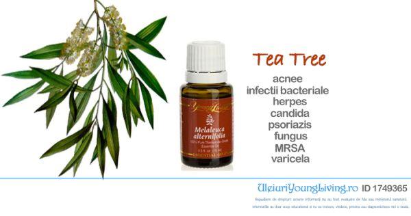 Ulei Esential de Melaleuca Alternifolia / Tea Tree / Arborele de Ceai - Uleiuri…