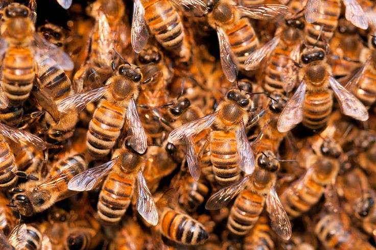 Bee Extinction Is Threatening the World's Food Supply, UN Warns | Motherboard