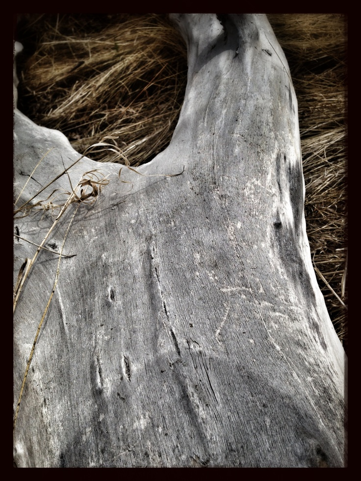 I took a picture of this log at north glenmore park.