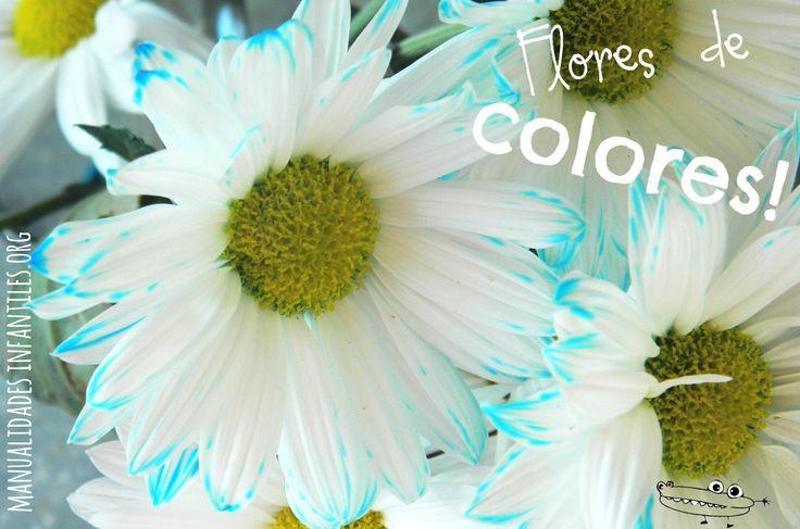 Es hora de hacer #ExperimentosDivertidos con los peques  ¿Cambiamos el color de las flores?