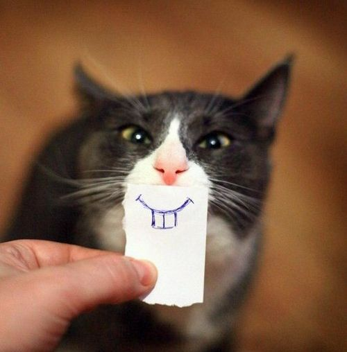 Smile, kitty!