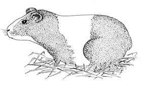 Resultado de imagen para sistema digestivo completo de un animal facil para dibujar