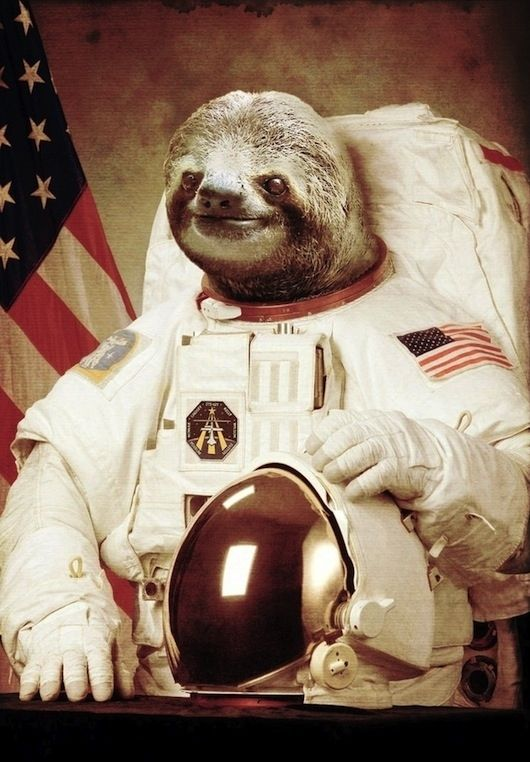 Space sloth | The 25 Greatest Sloths The Internet Has Ever Seen