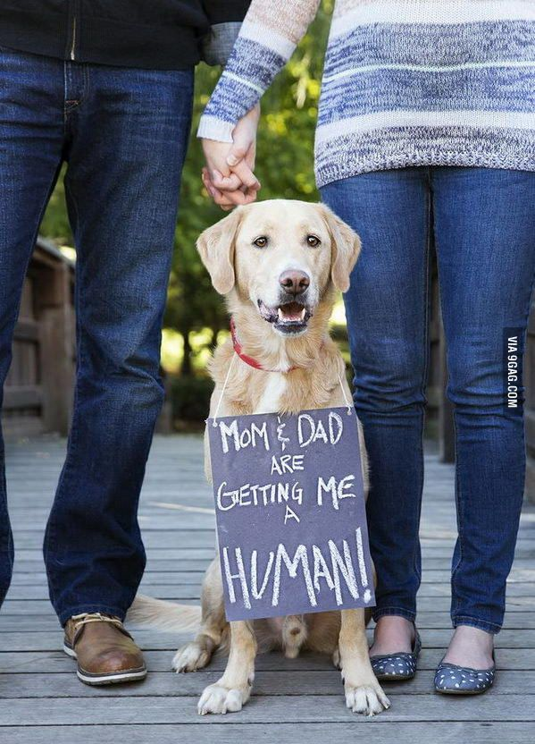 A Dog's Perspective on Human Baby - 9GAG