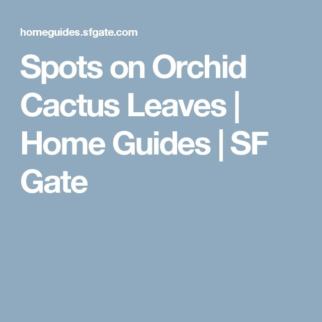 Spots on Orchid Cactus Leaves | Home Guides | SF Gate
