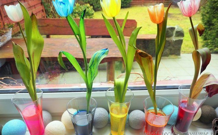 IS_tulipany (7)