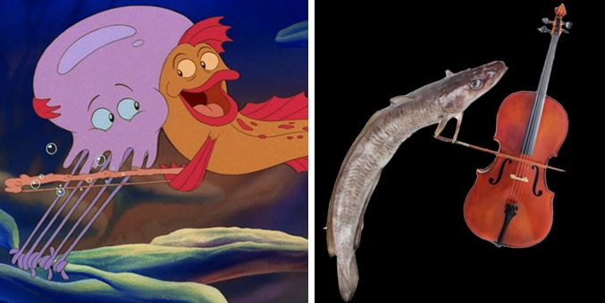 32 best images about little mermaid on pinterest disney for The little mermaid fish