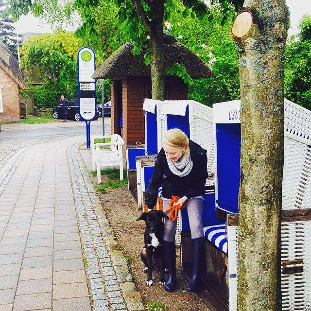 #mulpix auf sylt stehen strandkörbe an der bushaltestelle  #doggie #dog #sylt #keitum #regentag #gummistiefel #family #time #quality #time #tiefenentspannung #hundi #liebe #keinbockzurücknachhamburgzufahrnleidermussichhhh
