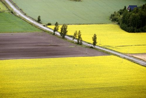 Landscape from South Ostrobothnia province of Western Finland. - Etelä-Pohjanmaa