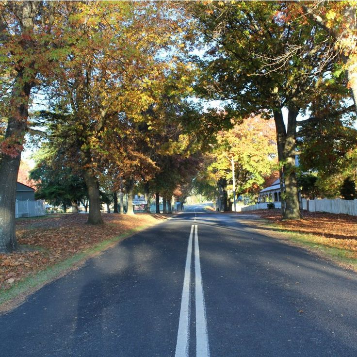 I do so love the roads of Tenterfield. Especially at this time of year.  We are having an amazing autumn.  Winter is almost here but still so much beautiful colour.
