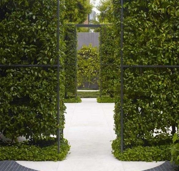living walls: Modern Gardens, Design Collection, Gardens Flowing, Gardens Lawn, Secret Gardens, Green Wall, Gardens Patio Landscape, Gardens Yard Decks Patio Roof, Gardens Design