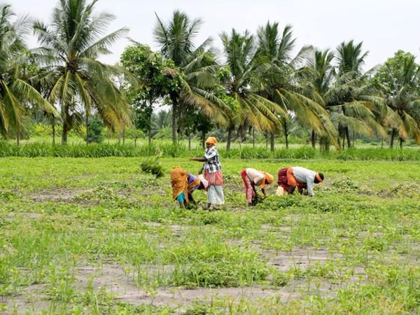 5 things the Cabinet cleared for the farm and job sectors - The Economic Times