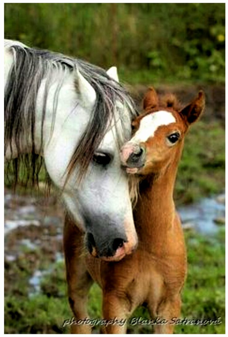 Mother & Baby - BEAUTUFUL!