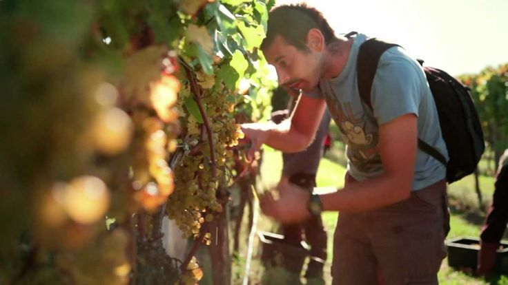 EIT Wine and Viticulture
