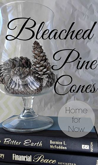 Bleached Pine Cones
