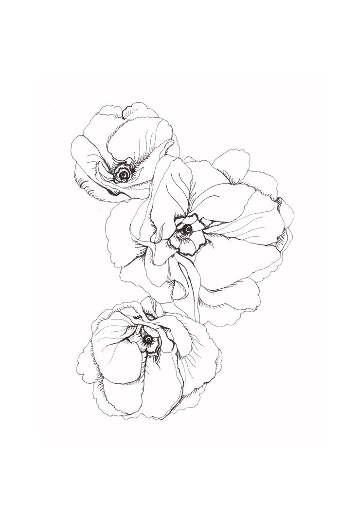 Line Art Aplic Flower Design : Best flower drawings ideas on pinterest