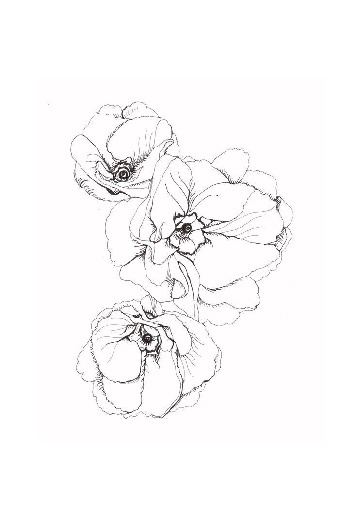 botanical drawings - Google Search