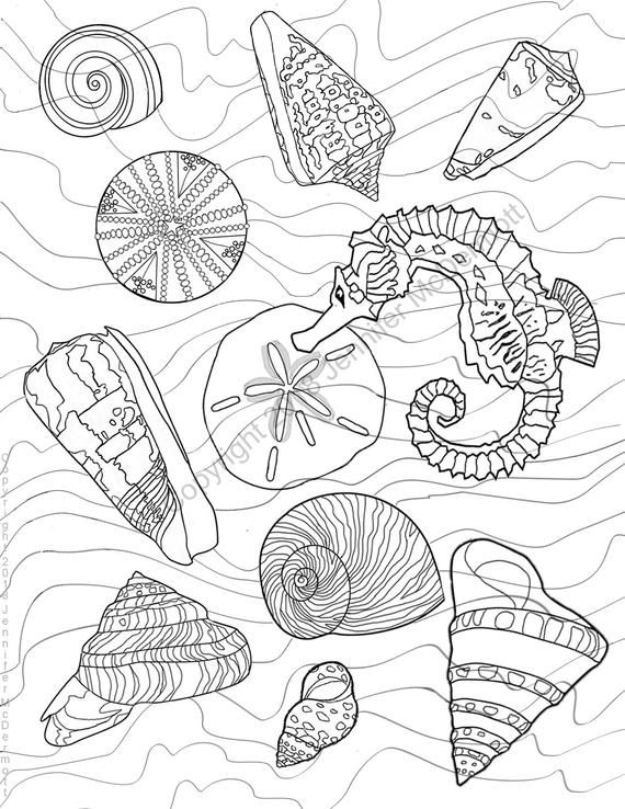 Coloring Page A Seahorse Among Seashells A Sea Urchin And Waves Coloring Pages Sea Shells Shell Drawing