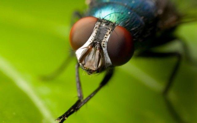 Как избавиться от мух в доме народными средствами 0