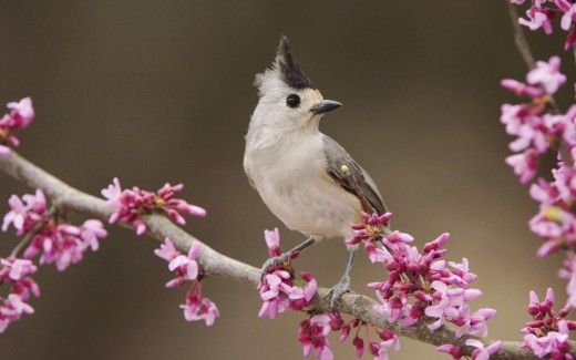 Very Beautiful Birds And Flowers