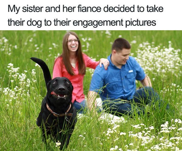 Dogs Ruined Perfect Shots – 100 Funny Animal Pictures