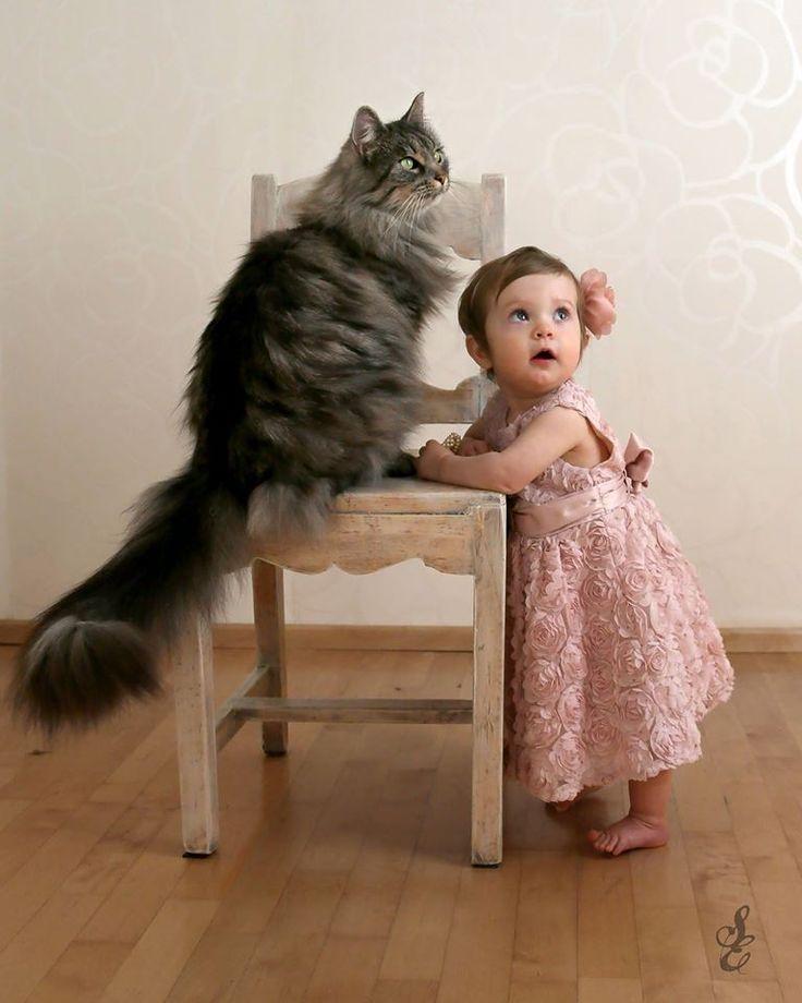 #oneyearold #photoshoot cat #mainecoon #baby #girl #1st