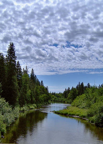 Northern Maine Woods   Silent Poetry   Pinterest ...