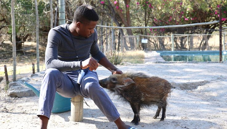 Molly the baby bushpig with our animal manager